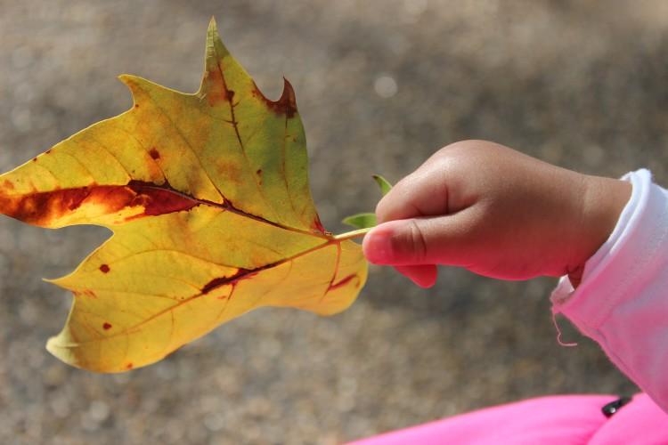 Mummy Blog - Autumn leaves