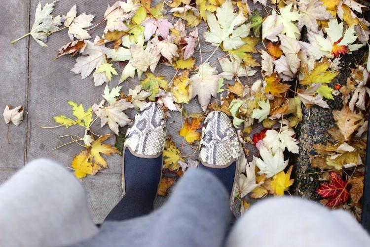 Autumn notting hill