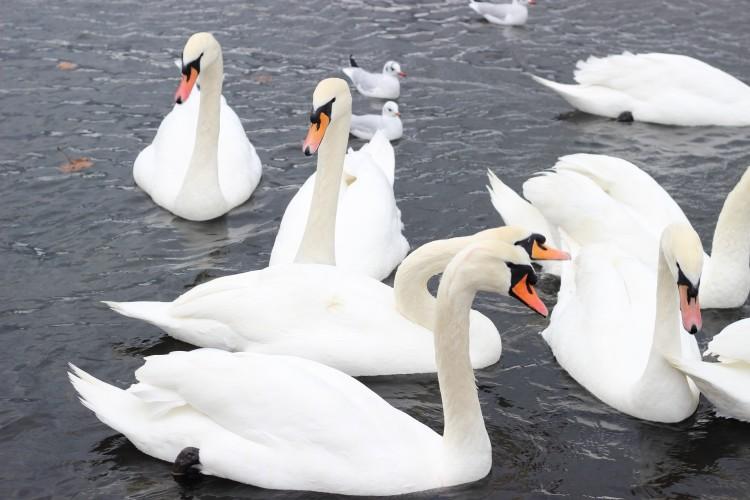 Family blog - round pond hyde park