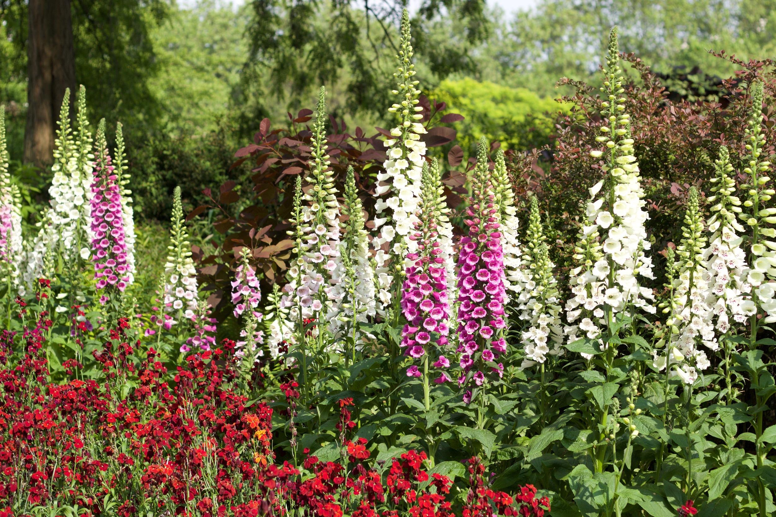flowers st james park