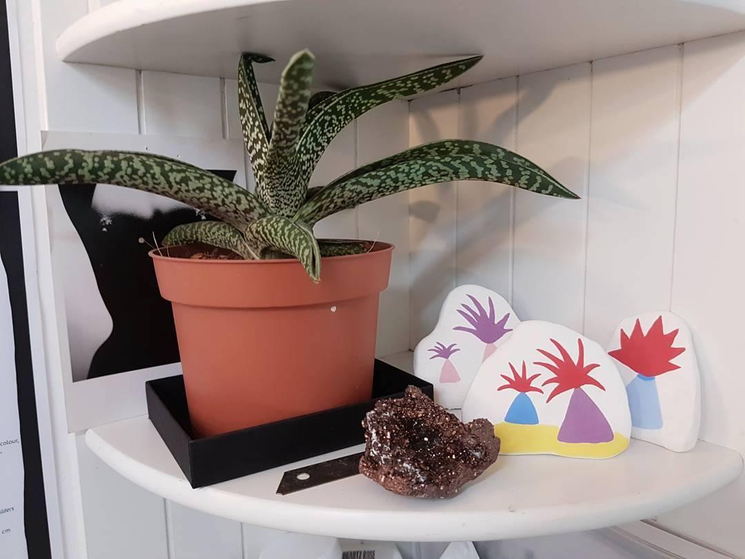 ceramics plant pot studio shelves