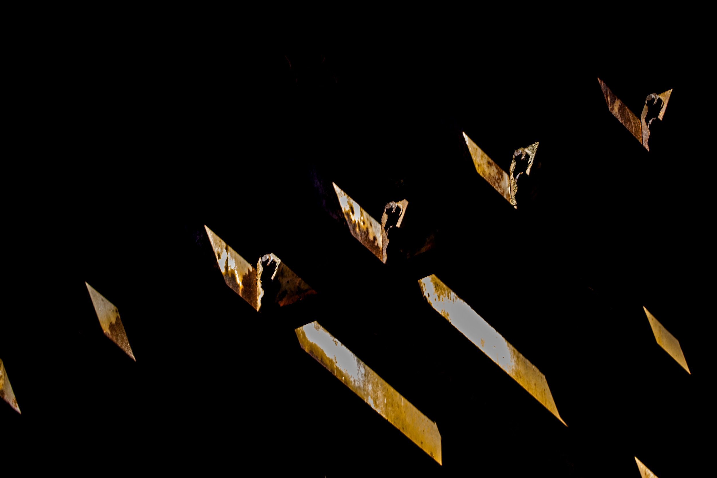 5I8A3534 copy-1 cropped X.jpg