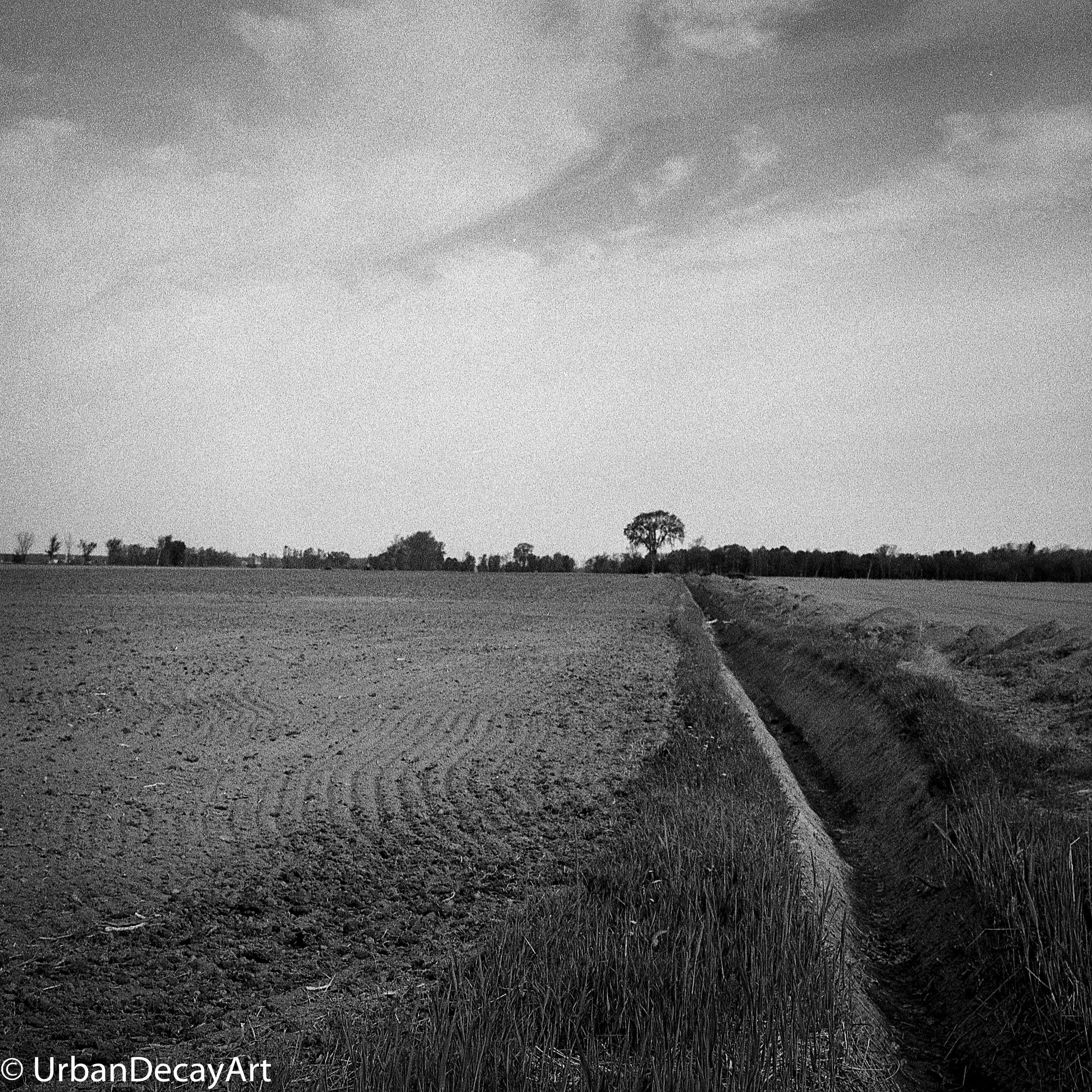 Tree ormstown Kodak Tri-x Medium format