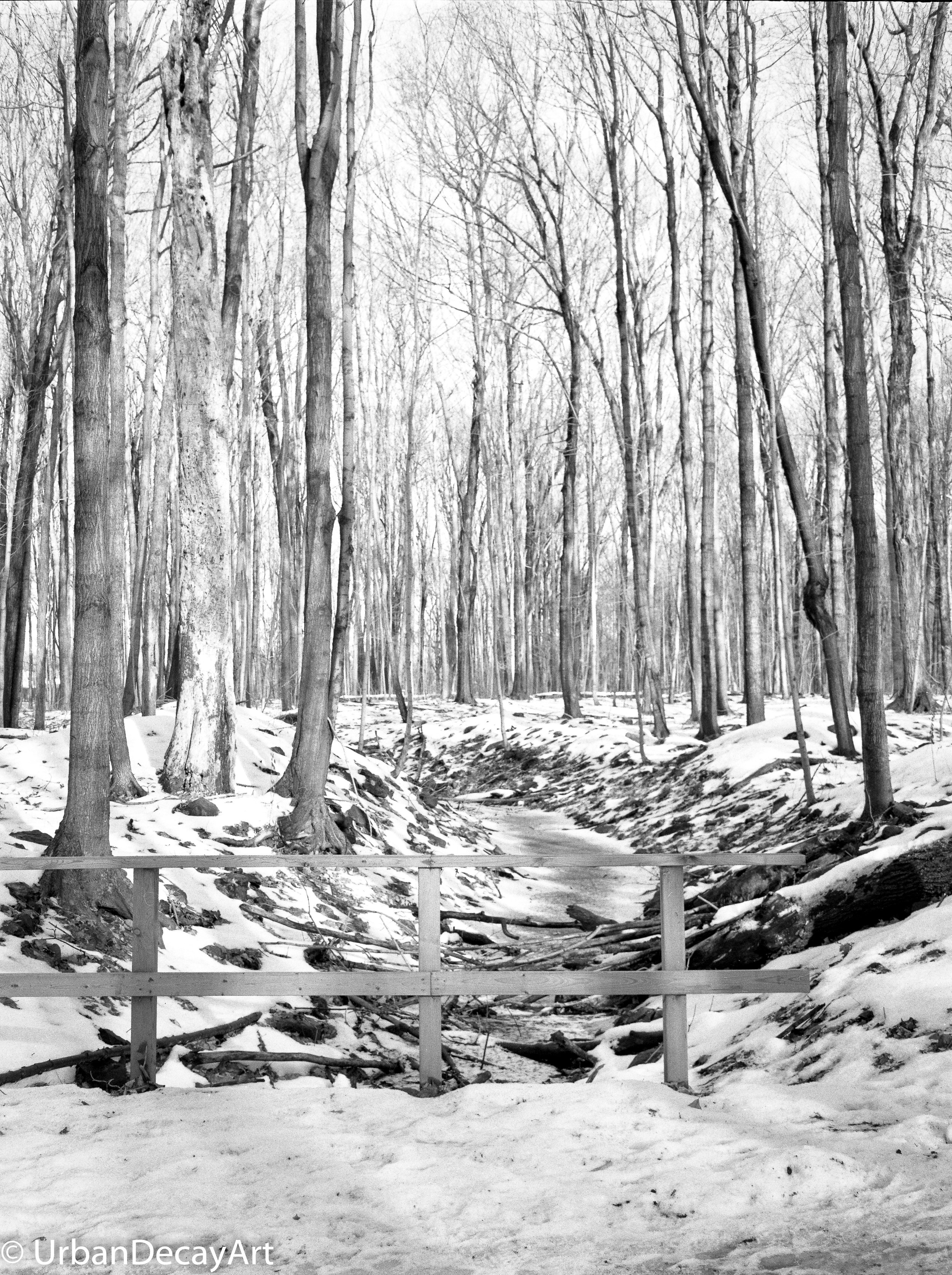 Forest1-645800685.jpg