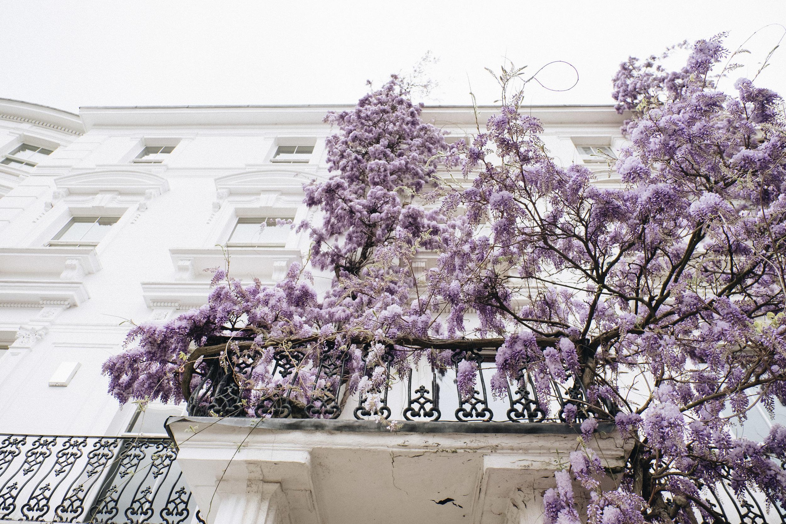 Blossom-207.jpg