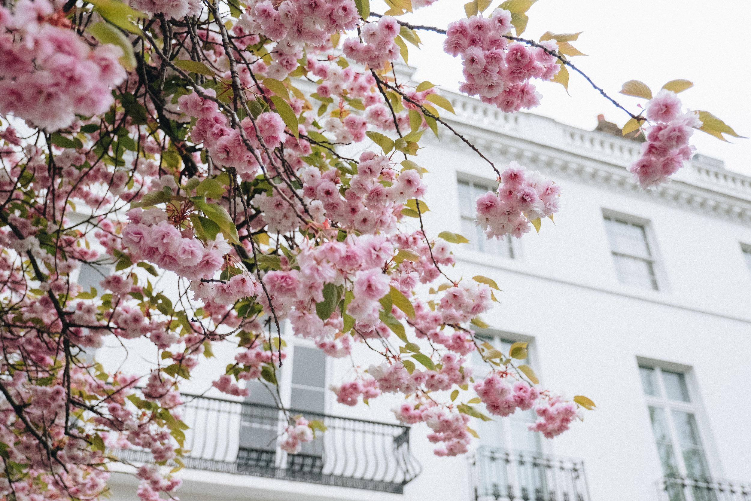 Blossom-131.jpg