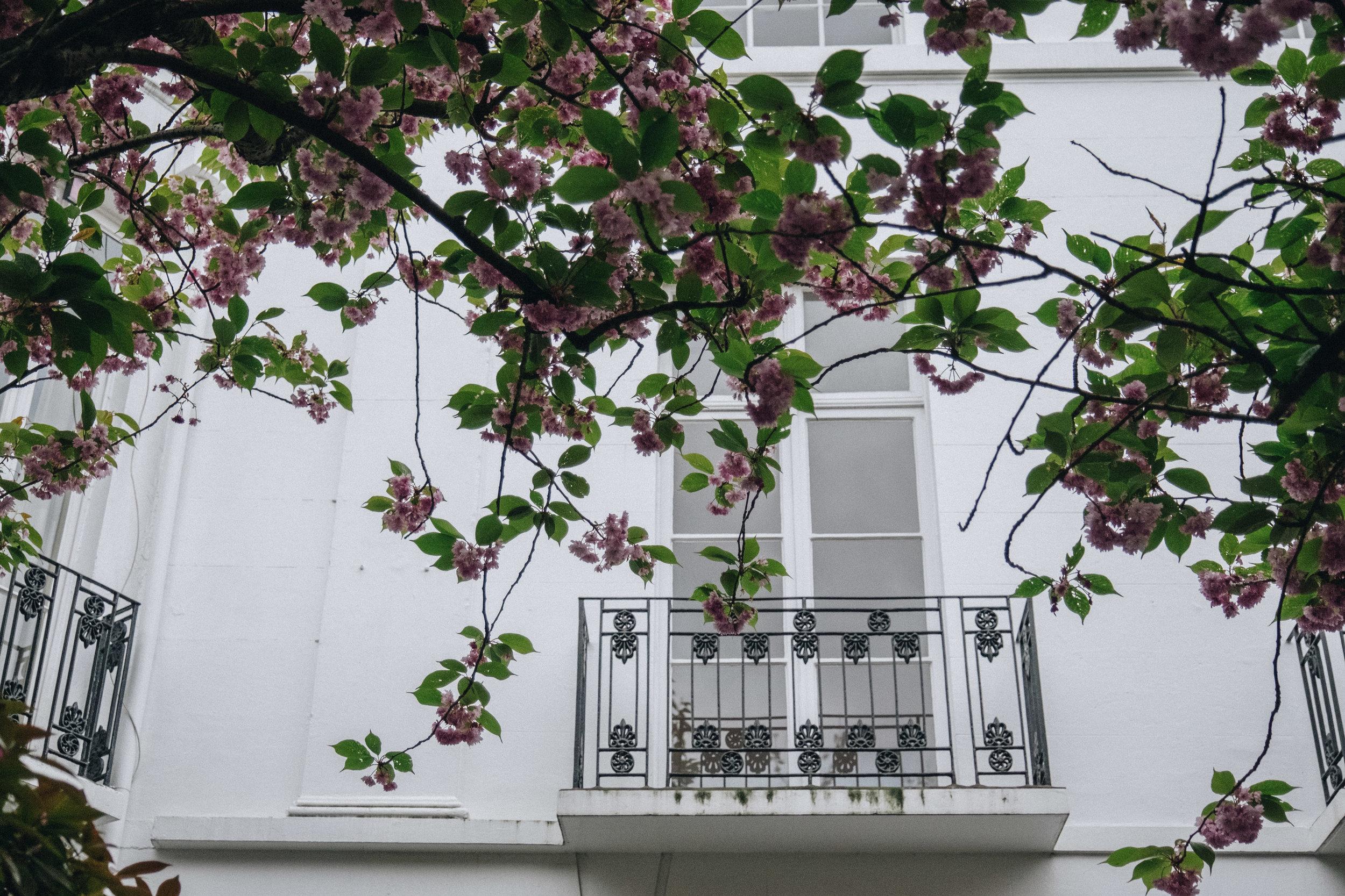 Blossom-107.jpg