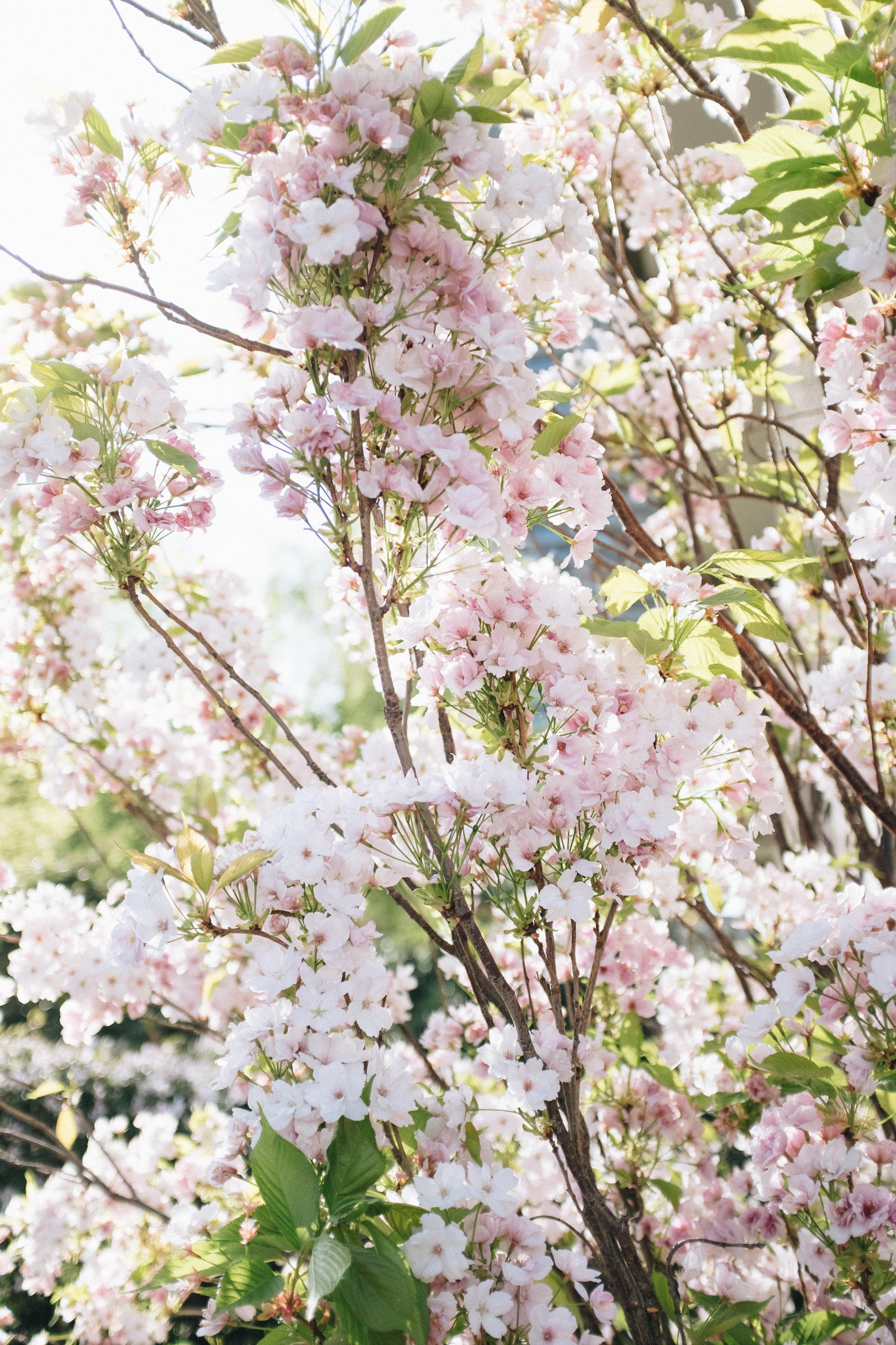 Blossom-47.jpg