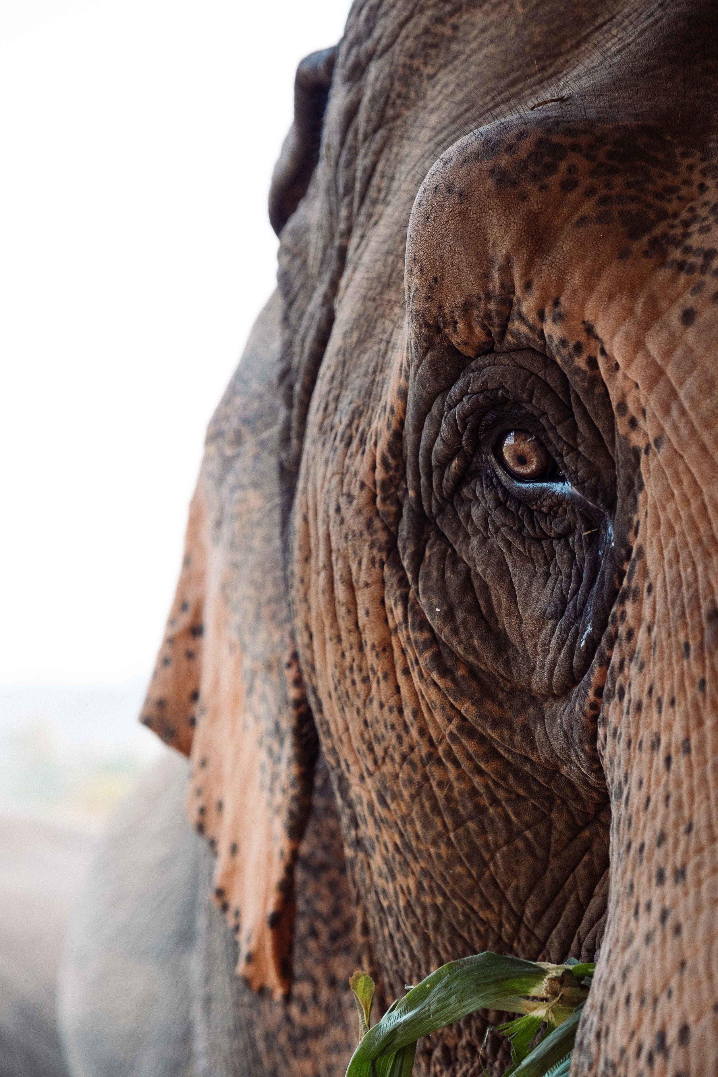 Elephants-13.jpg