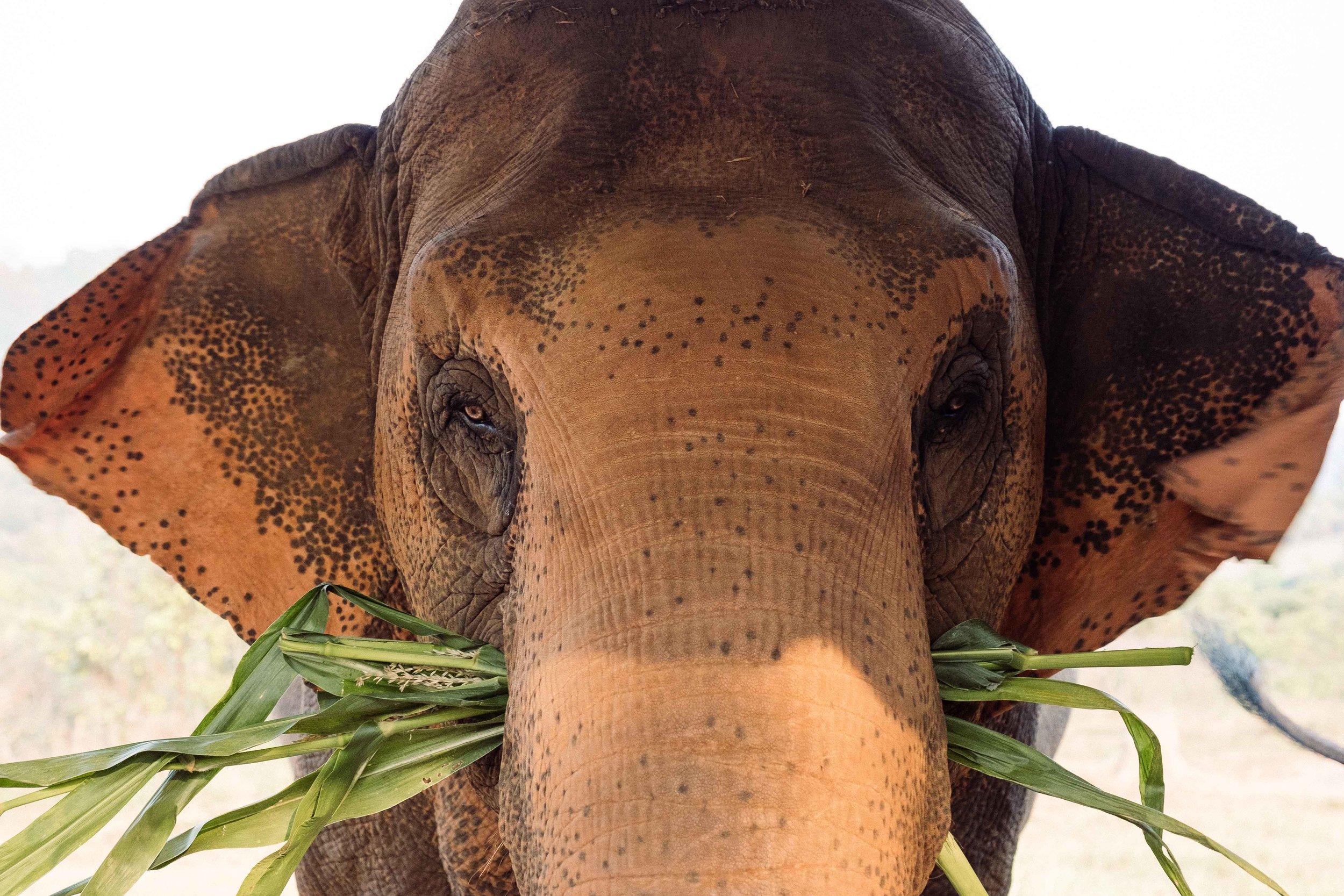 Elephants-12.jpg
