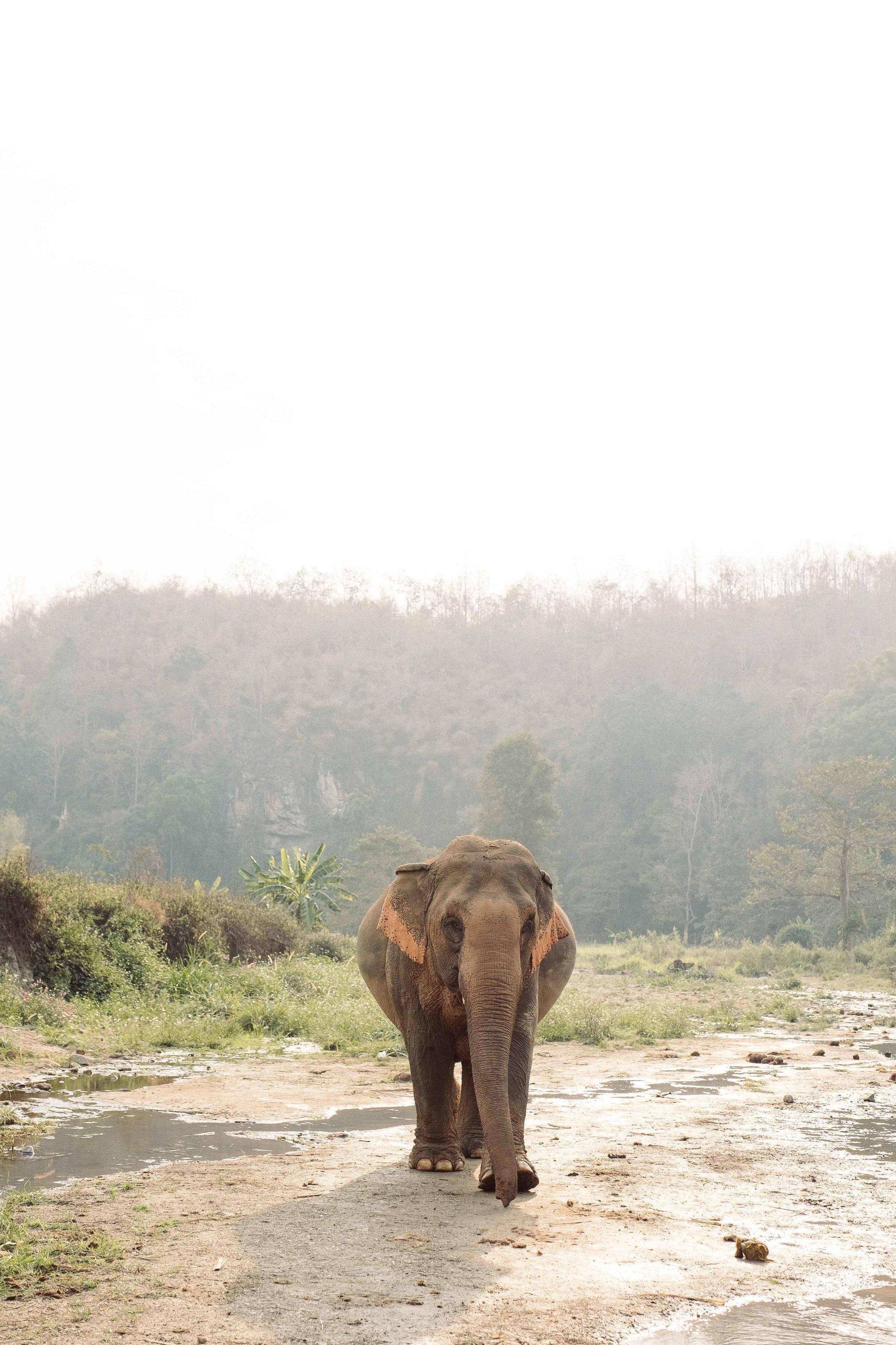 Elephants-10.jpg