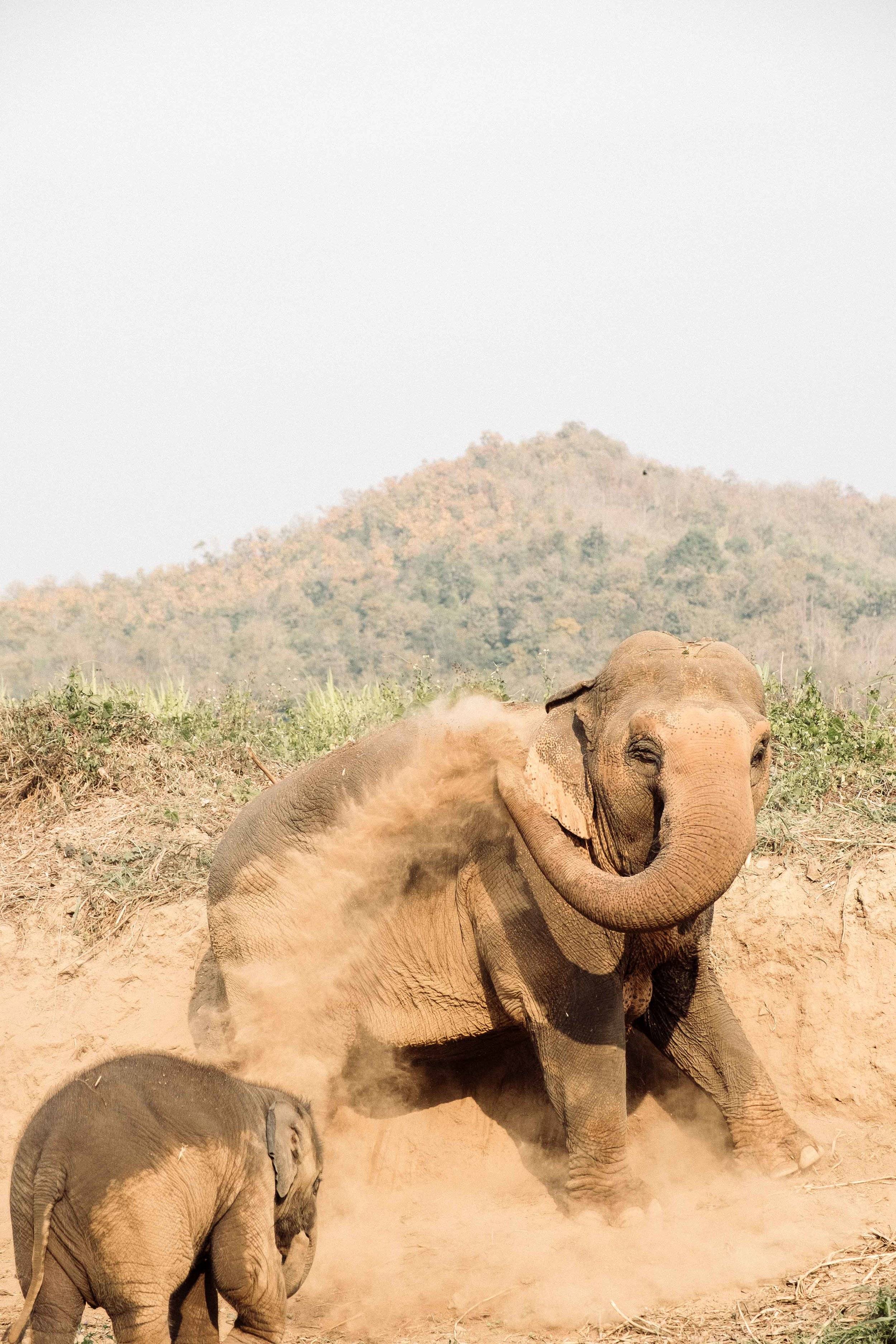 Elephants-5.jpg