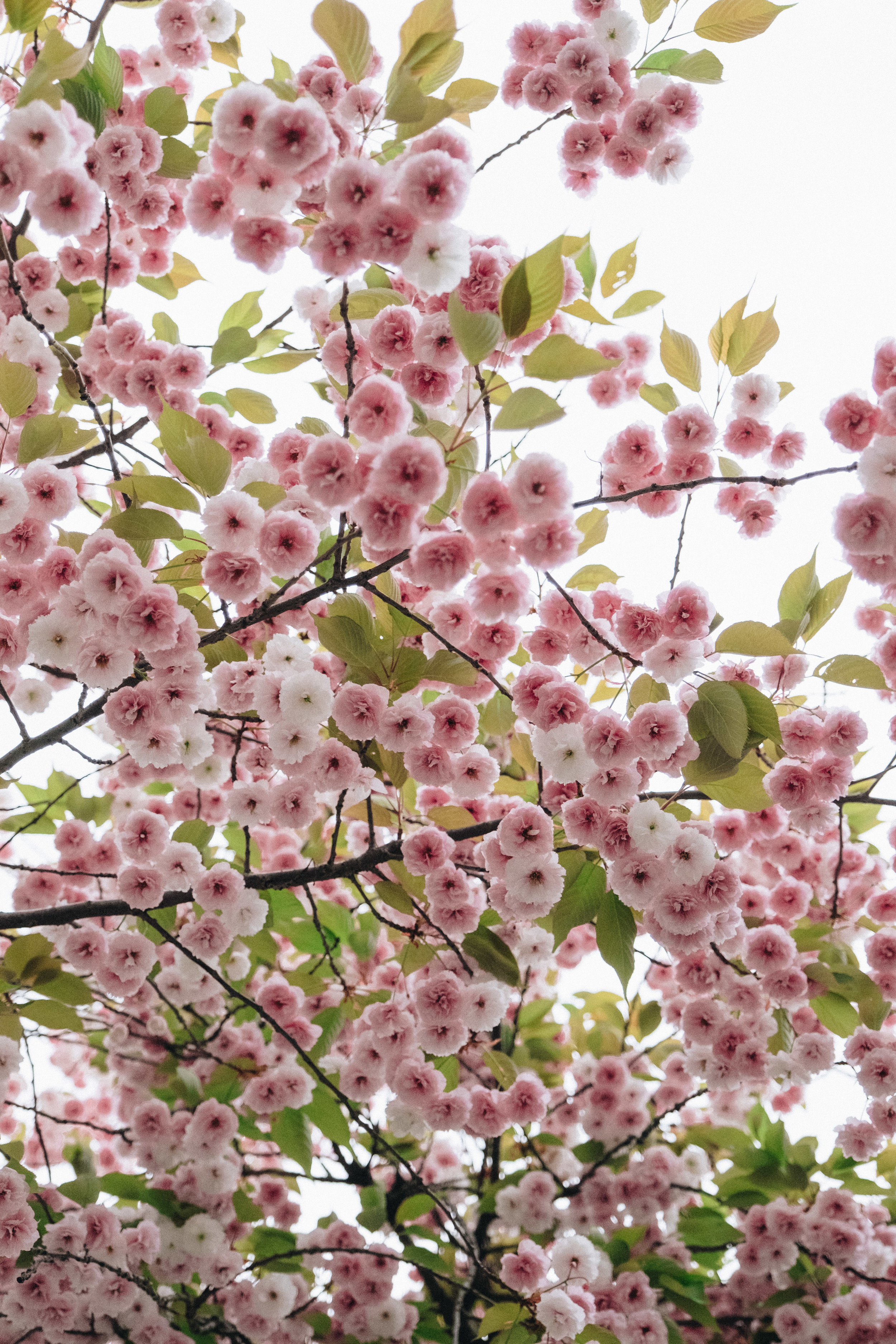 Blossom-121.jpg