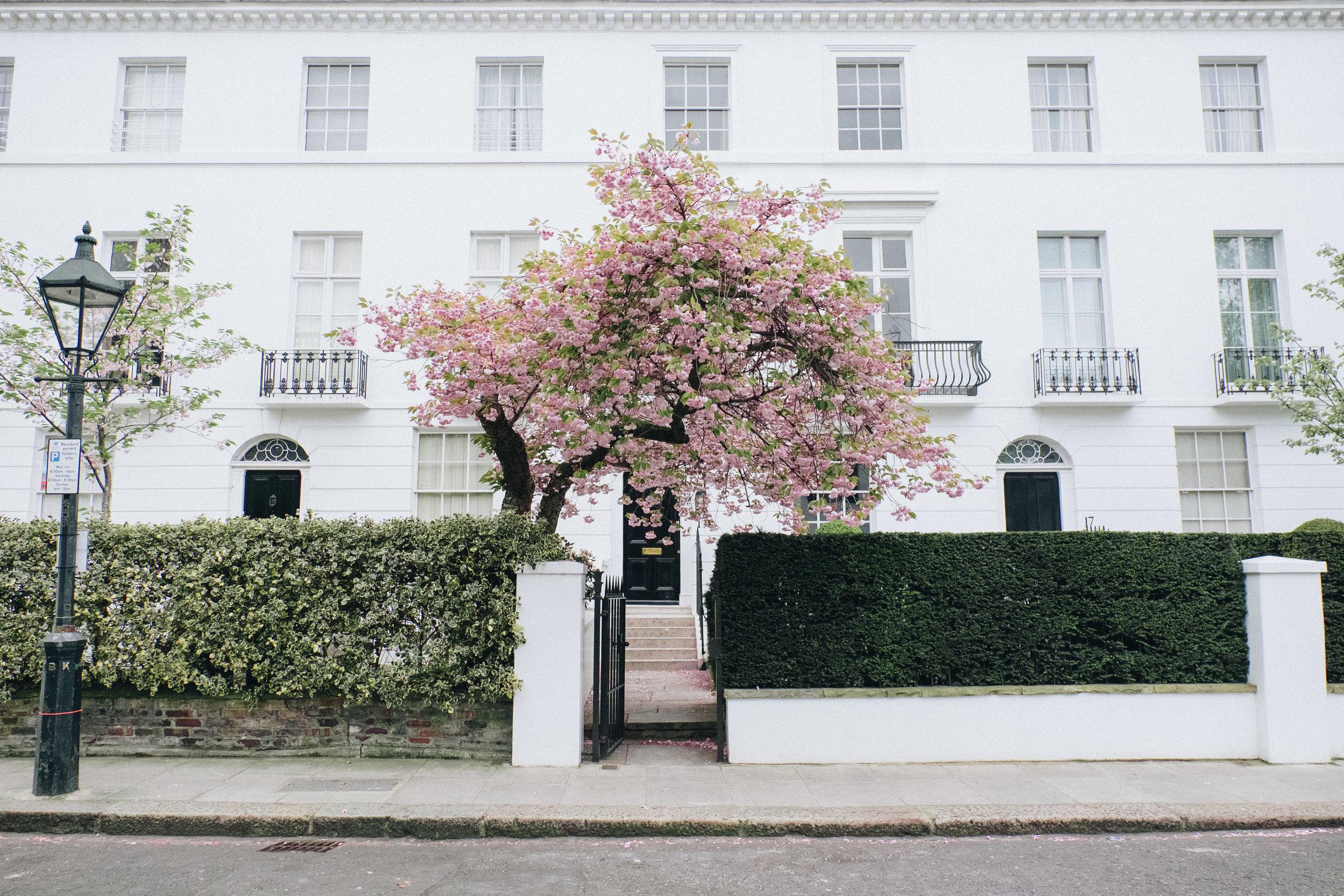 Blossom-127.jpg