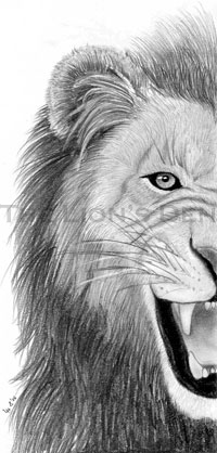 Indexed Lion