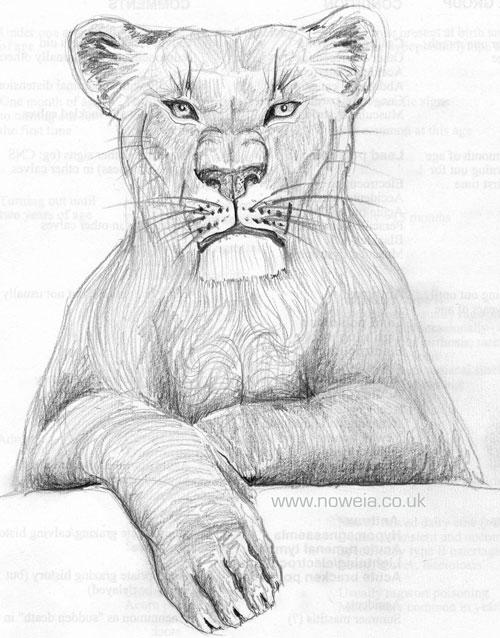 LionessSketchNoweia.jpg