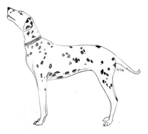 dalmatian_sketch.jpg