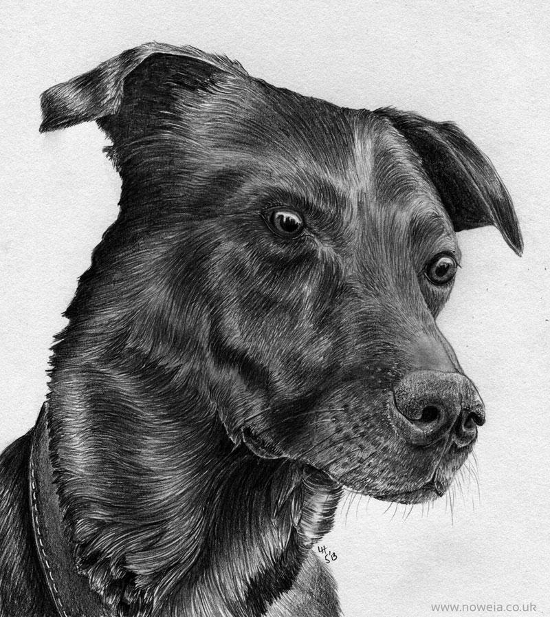 Ollie Boggle Dog!