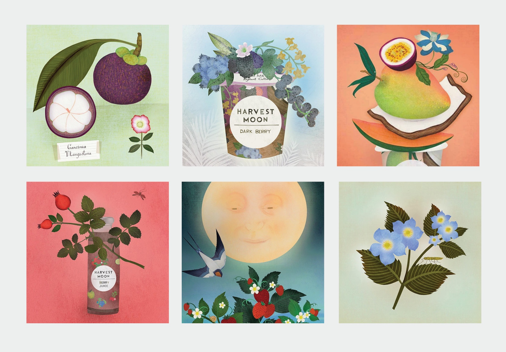 Instagram campaign, tailor-made for Harvest Moon, 2017-2018, in collaboration with illustrator  Anne Smith .