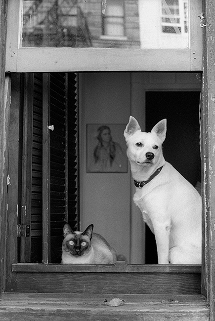 Dog-and-cat-in-window.jpg