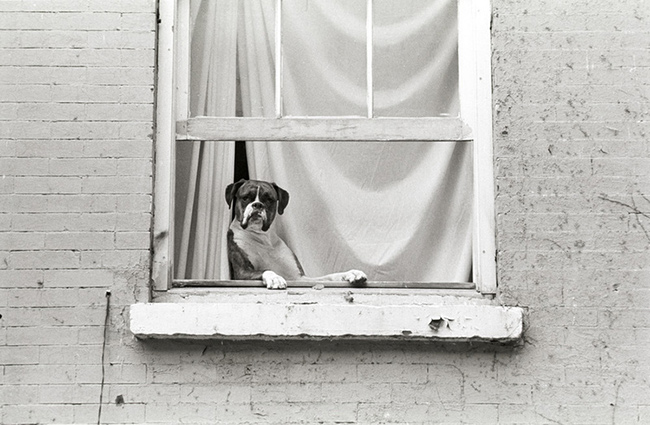 Dog-in-window.jpg