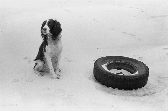 Dog-and-tire.jpg