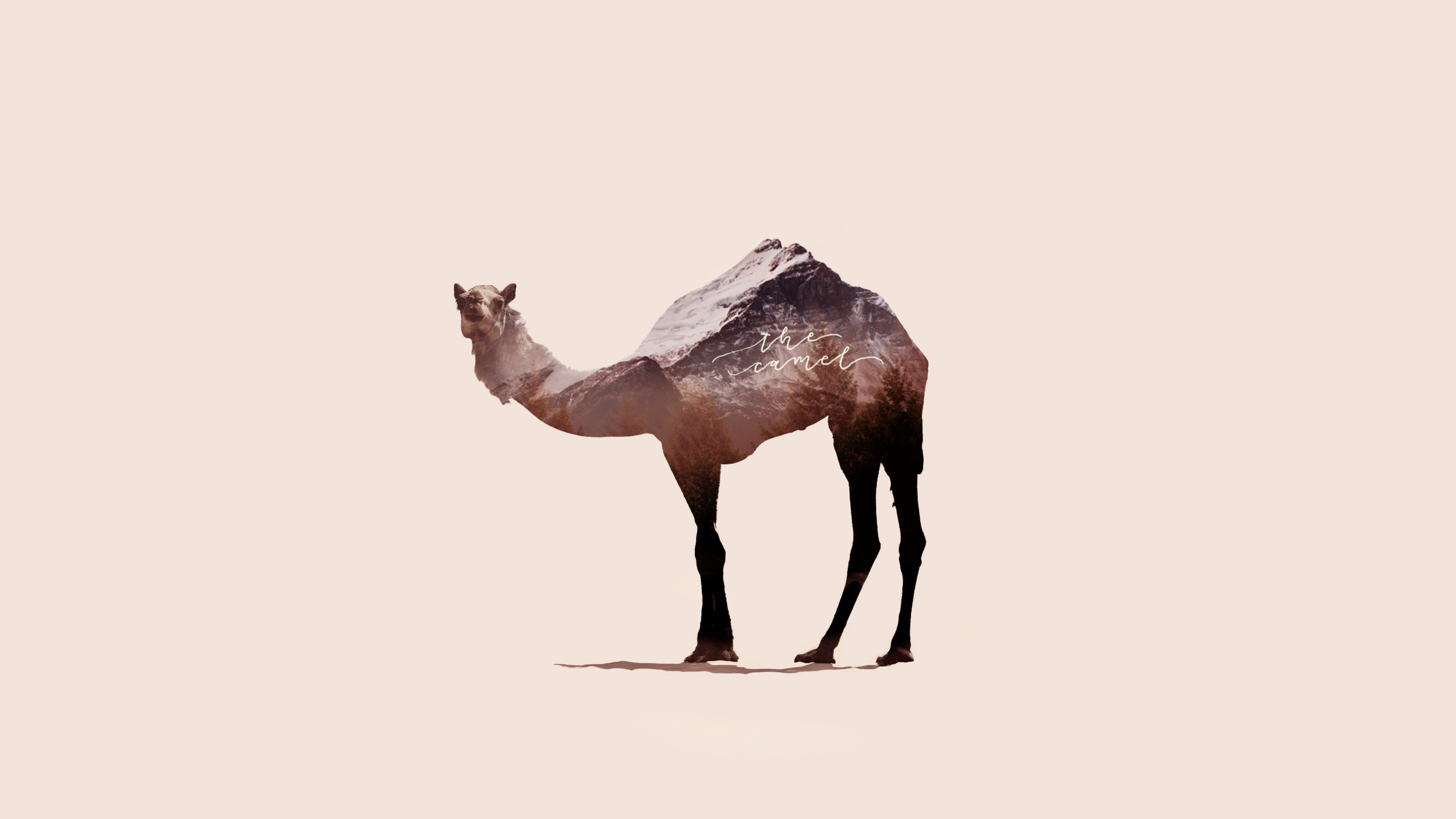 Abstract Camel.png