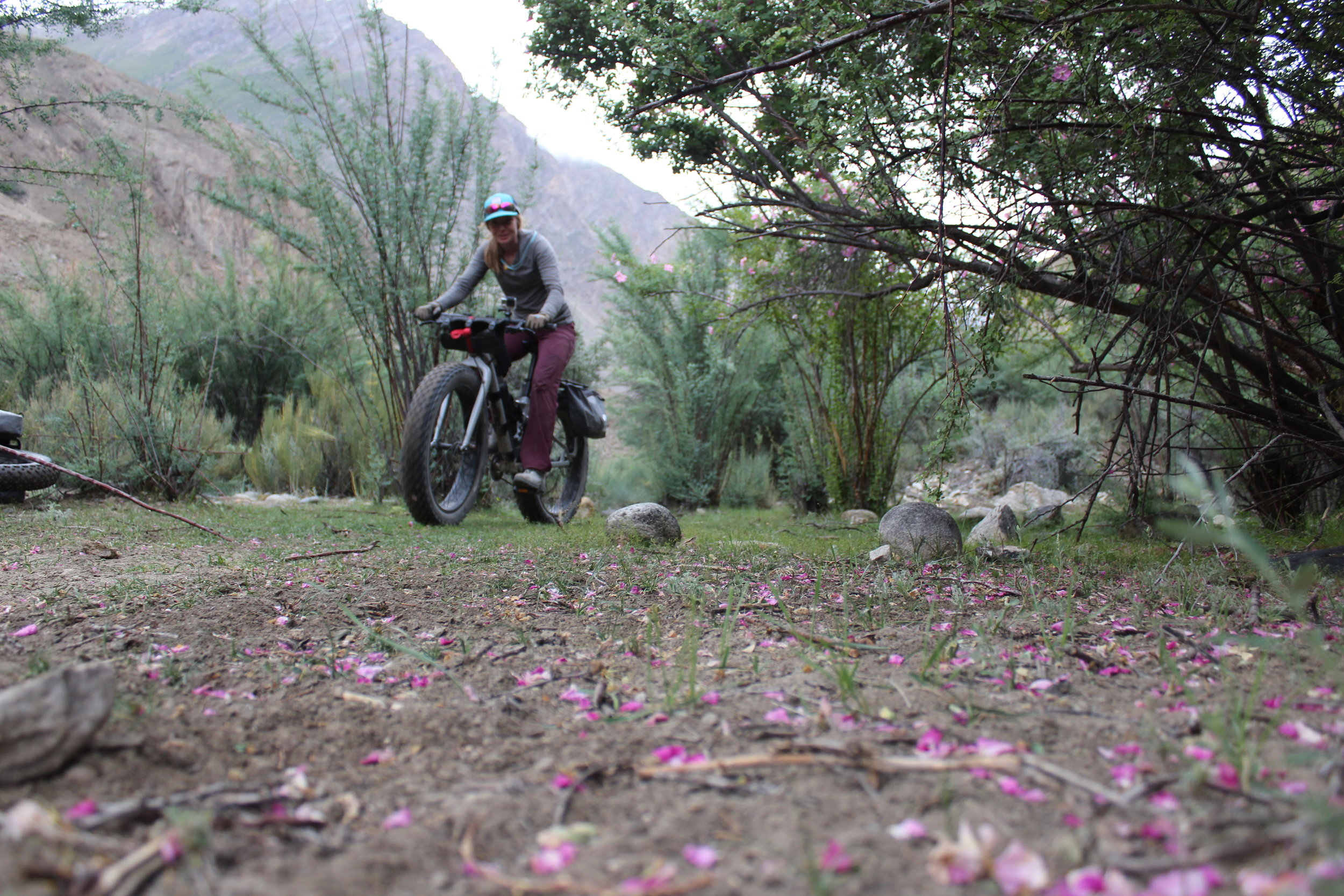 and this is what gave us flat tires outta all the gnar. Pretty rose petals with some thorns scattered in-between.