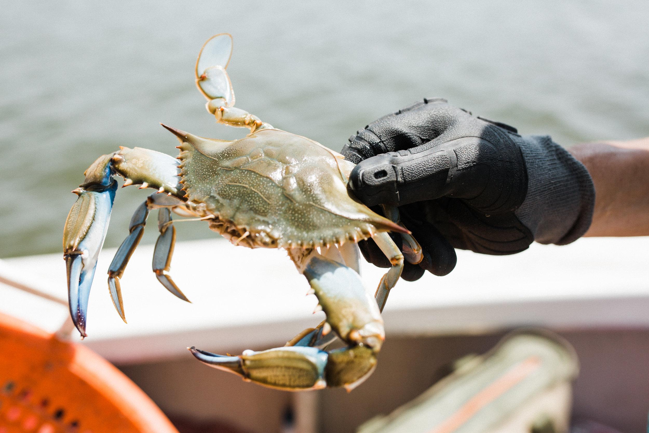 crabs-27.jpg