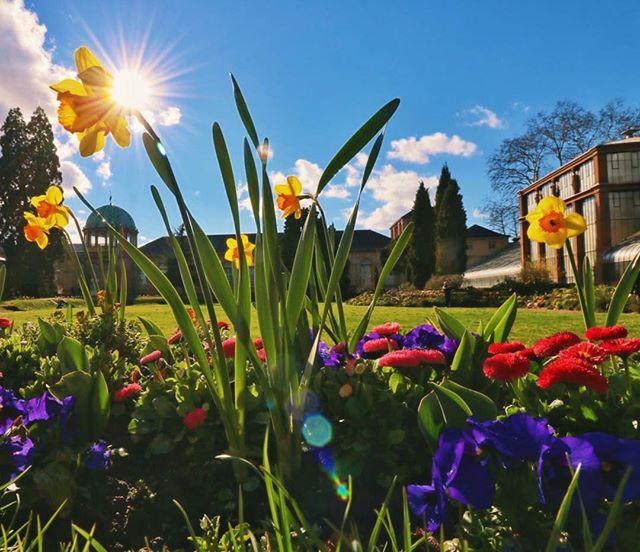Hallo ihr Lieben 🤗 mit diesem sonnigen Bild aus dem Botanischen Garten senden wir euch ganz viel Motivation für den Sonntag! 💐🐝☀️🌈 #springtime #flowerpower #botanicalgarden #schlosspark #frühling #frühlingsblumen #nature #beautifulcity #sunshine #karlsruhe #badenwürttemberg #germany #repost @visitkarlsruhe