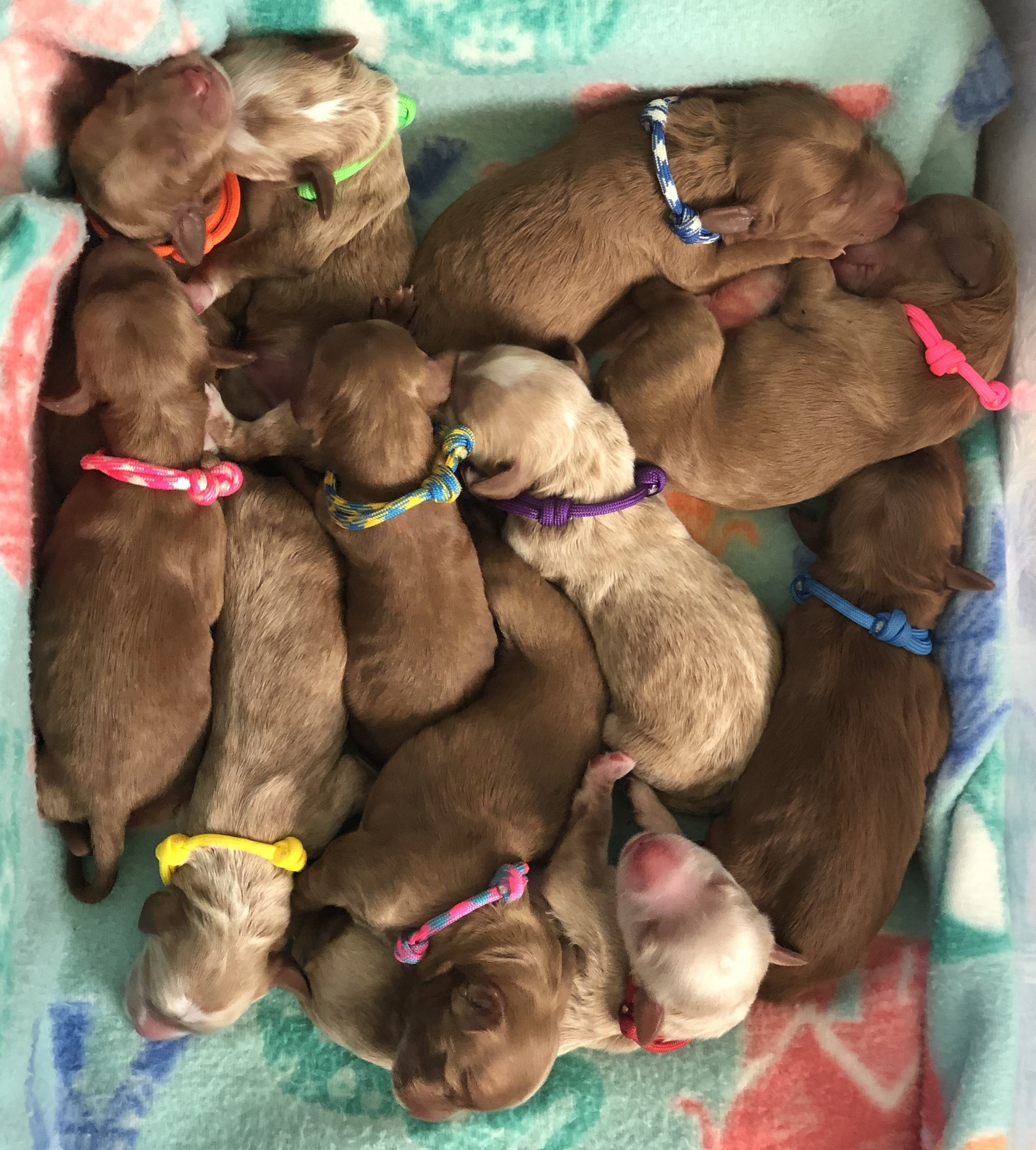 Bertie, Gussie, Jasper, Peggy, Cora, Beatrice, Mable, Percy, Myrtle, Madeline and Jeeves.