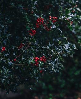 christmas blog4.JPG