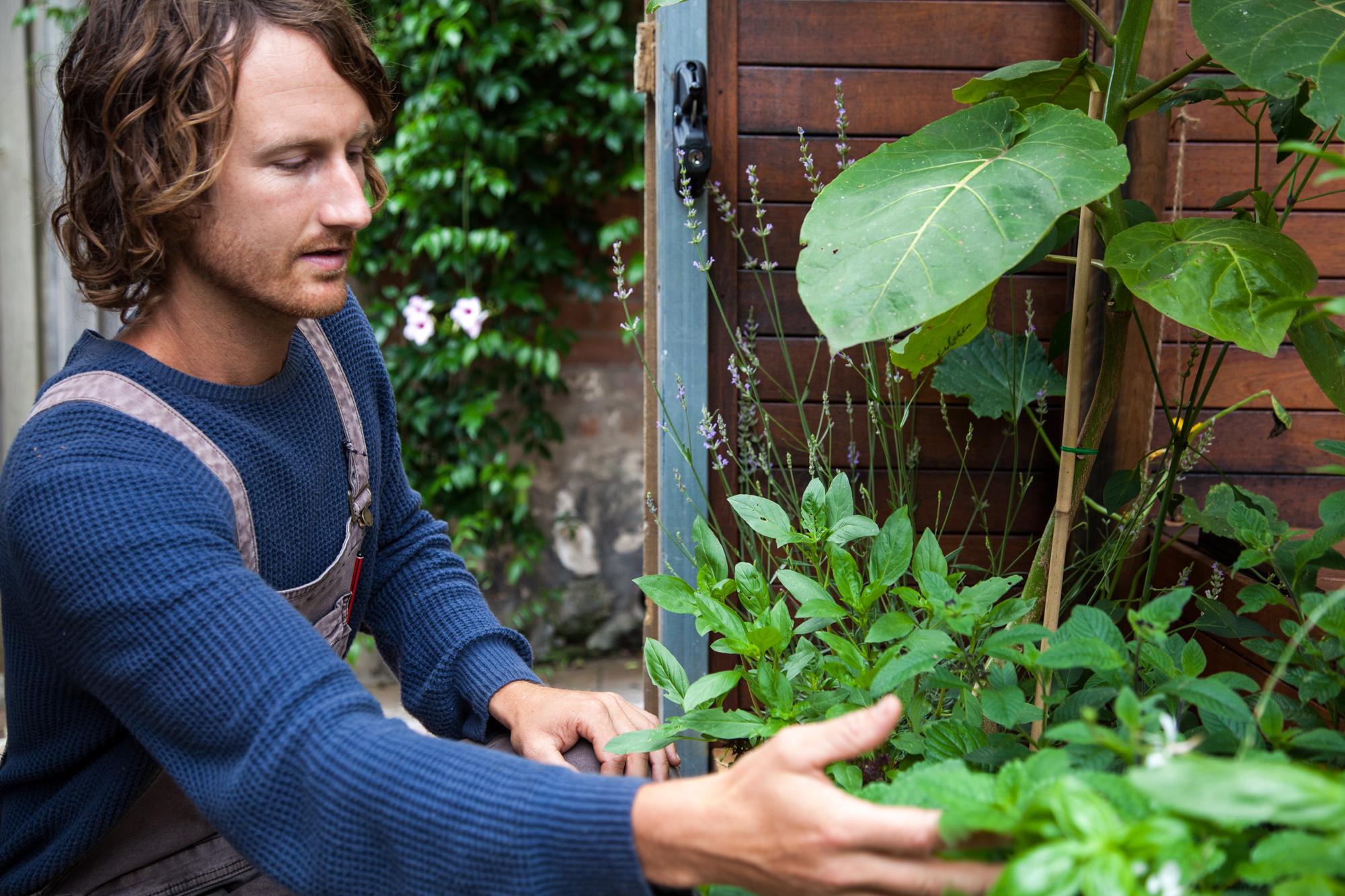UrbanGrowers-PaddingtonGarden-4.jpg