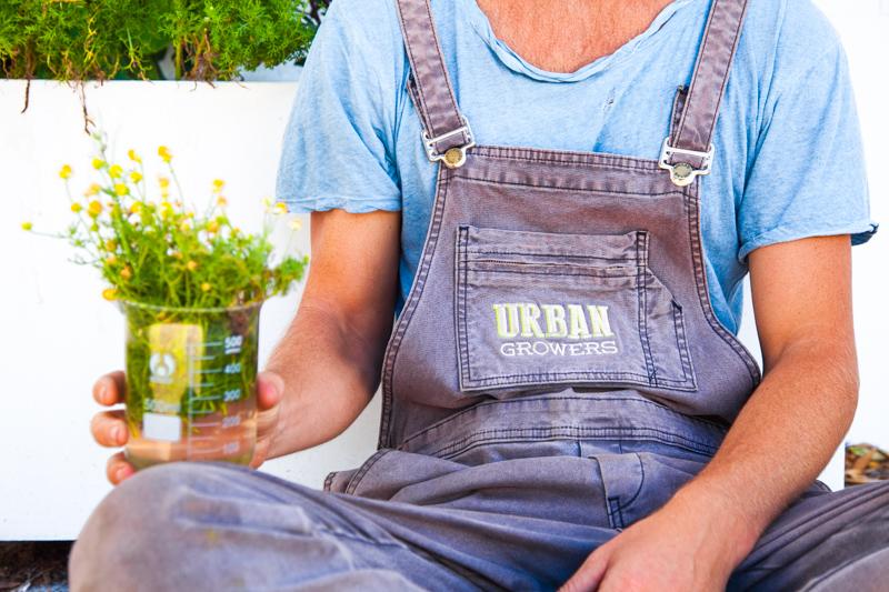 UrbanGrowers-OrchardSt-Bondi-lowres-28.jpg