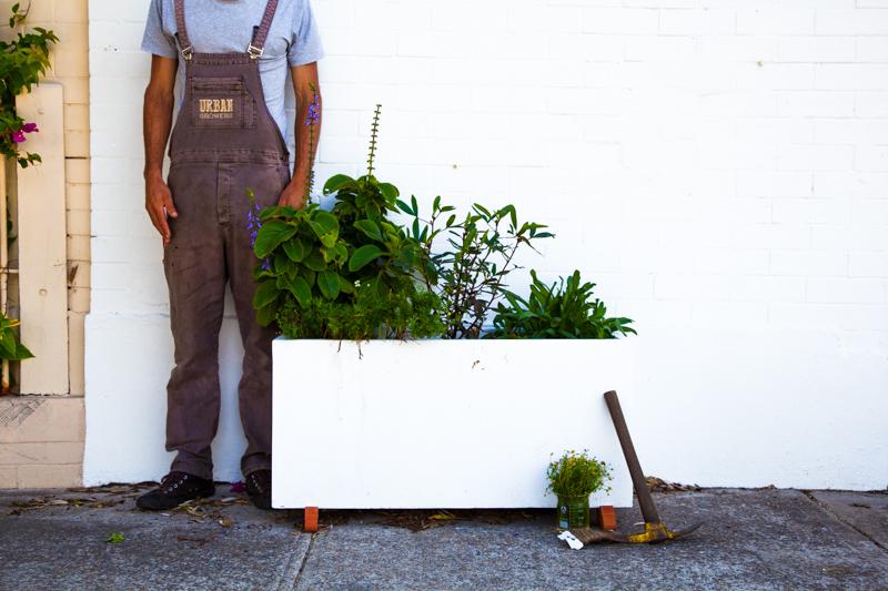 UrbanGrowers-OrchardSt-Bondi-lowres-21.jpg