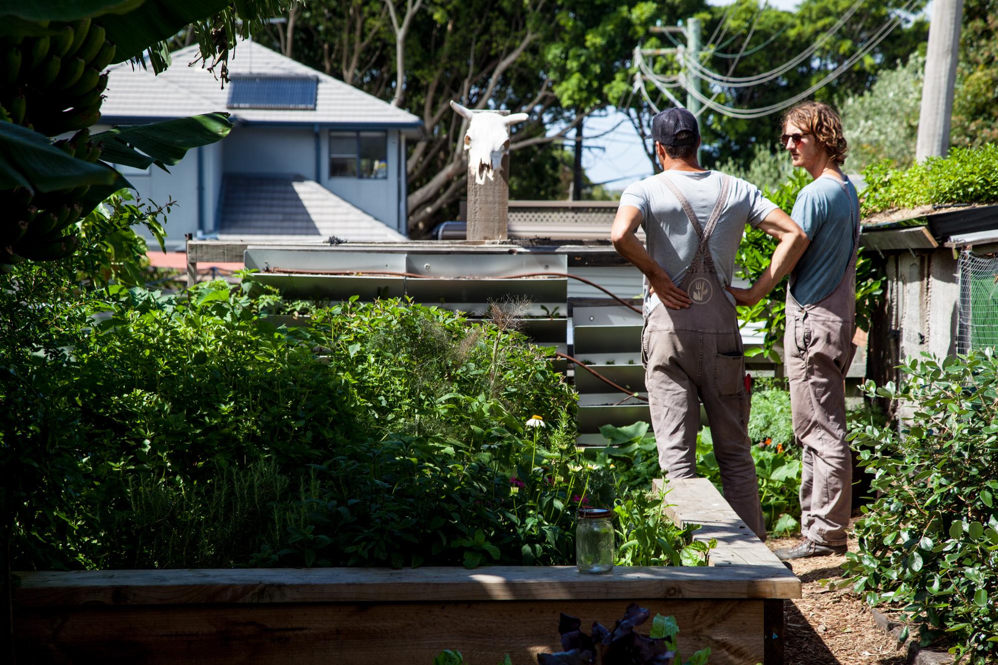 UrbanGrowers-ThreeBlueDucks--4.jpg
