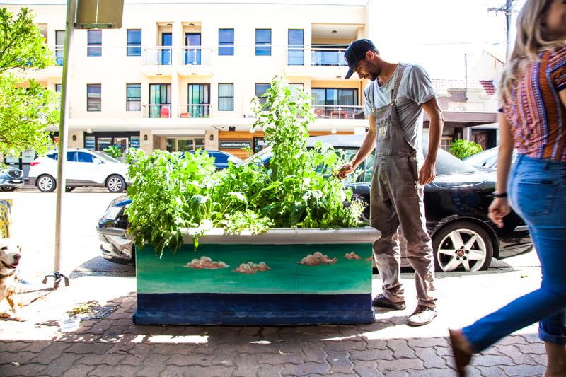 UrbanGrowers-OrchardSt-Bronte-lowres-13.jpg