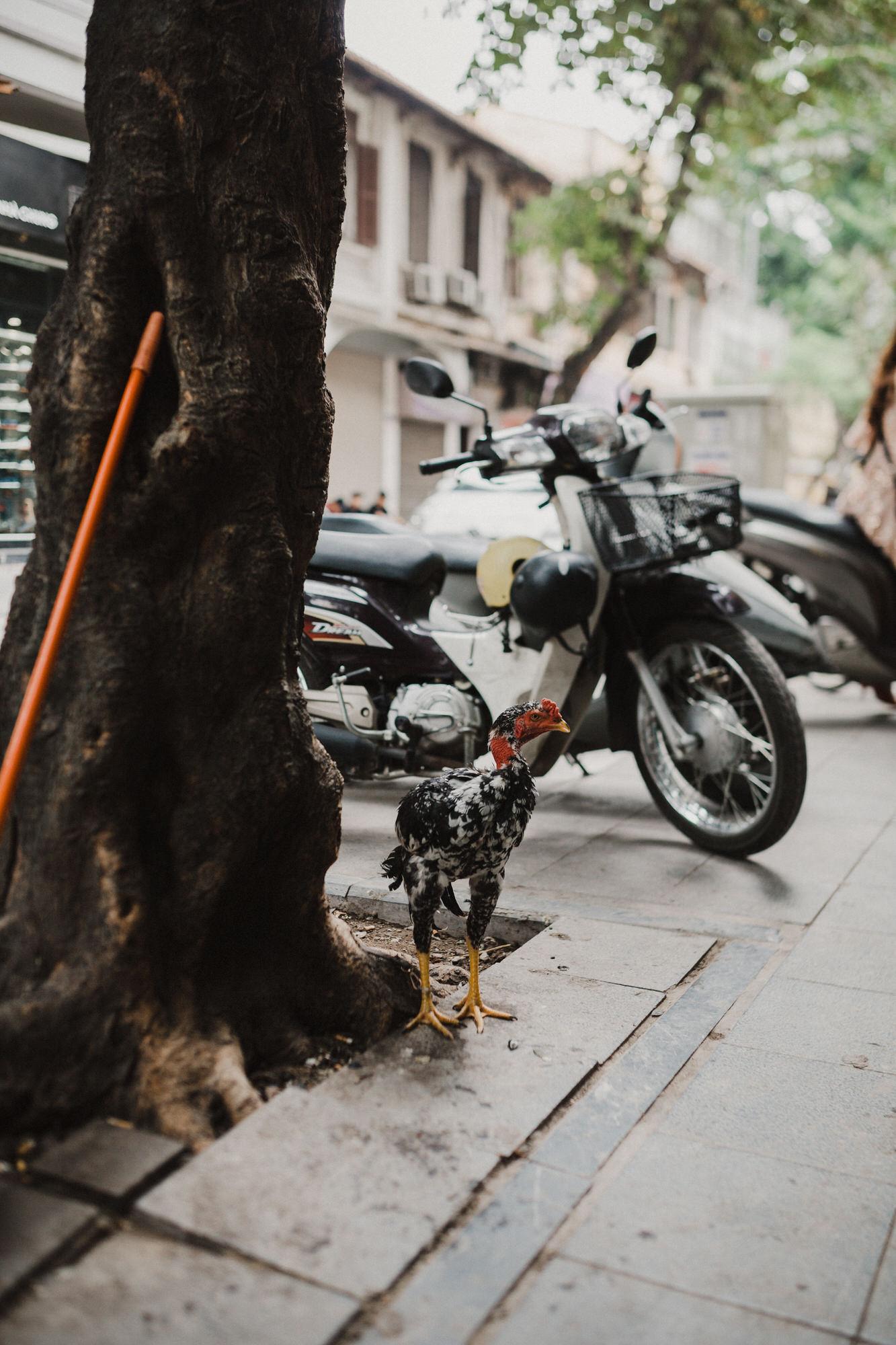 hanoivietnamcitytravelblog-9727-1.jpg