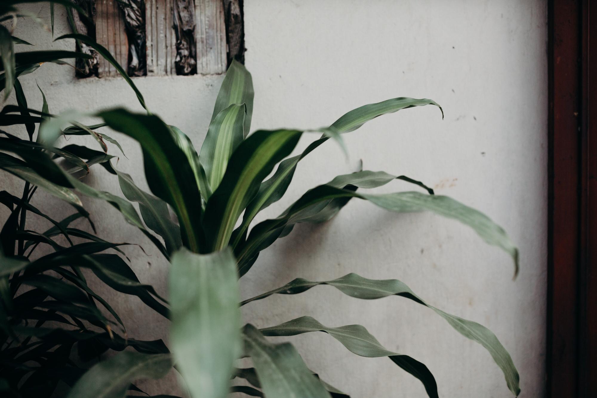 hanoivietnamcitytravelblog-9785-1.jpg