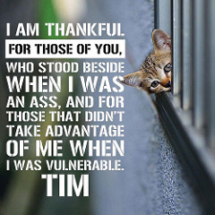 I don't know who Tim is but I'm thankful for flickr when I don't have the right photo myself.