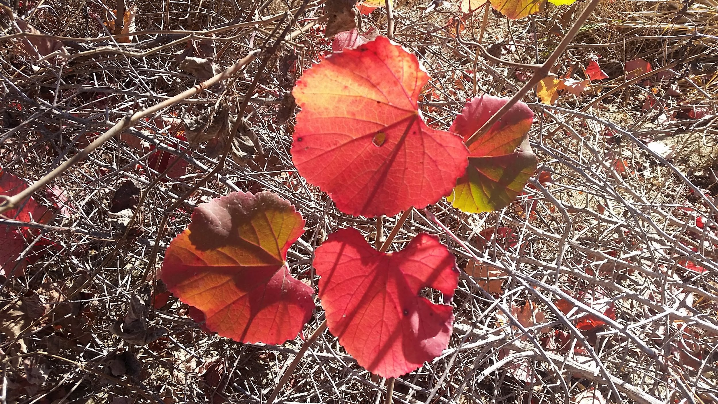 Heart shaped leaves I found while wandering around nature.