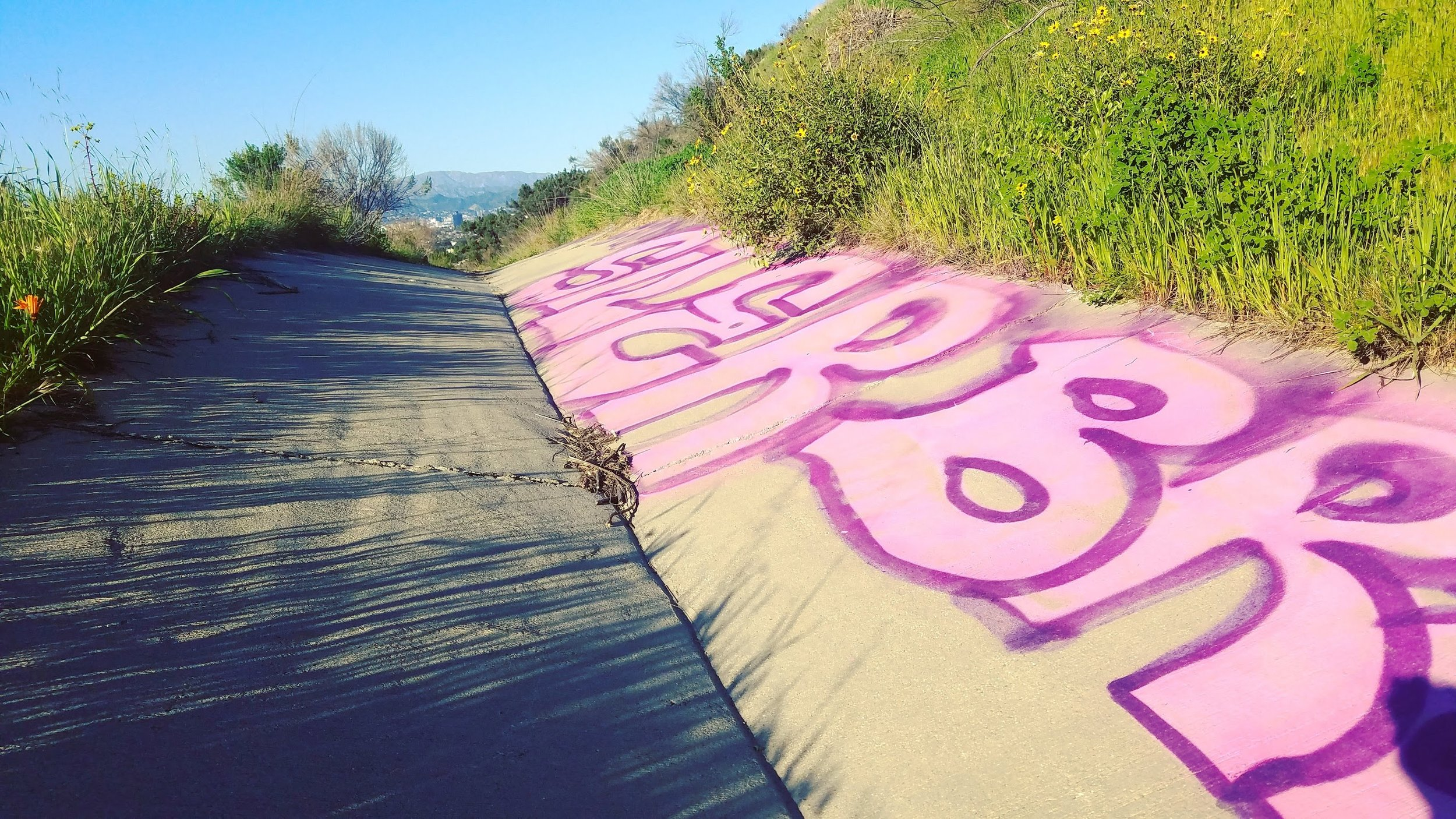 A magical pathway of graffiti and wildlife.