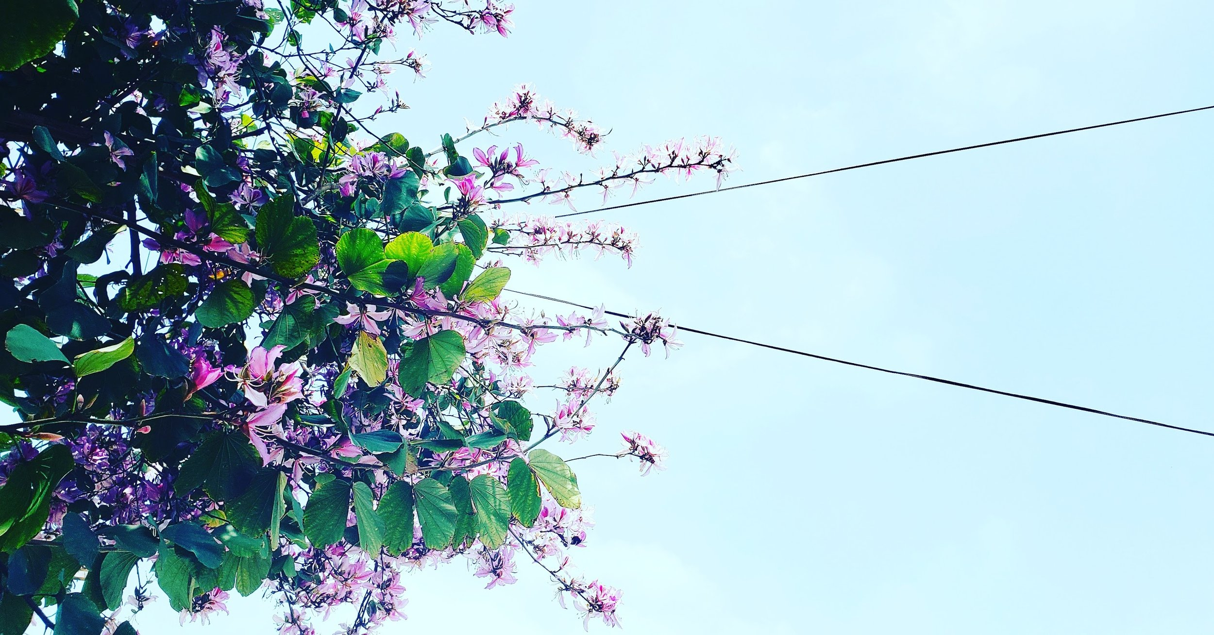 Minimalist flowers and sky photography