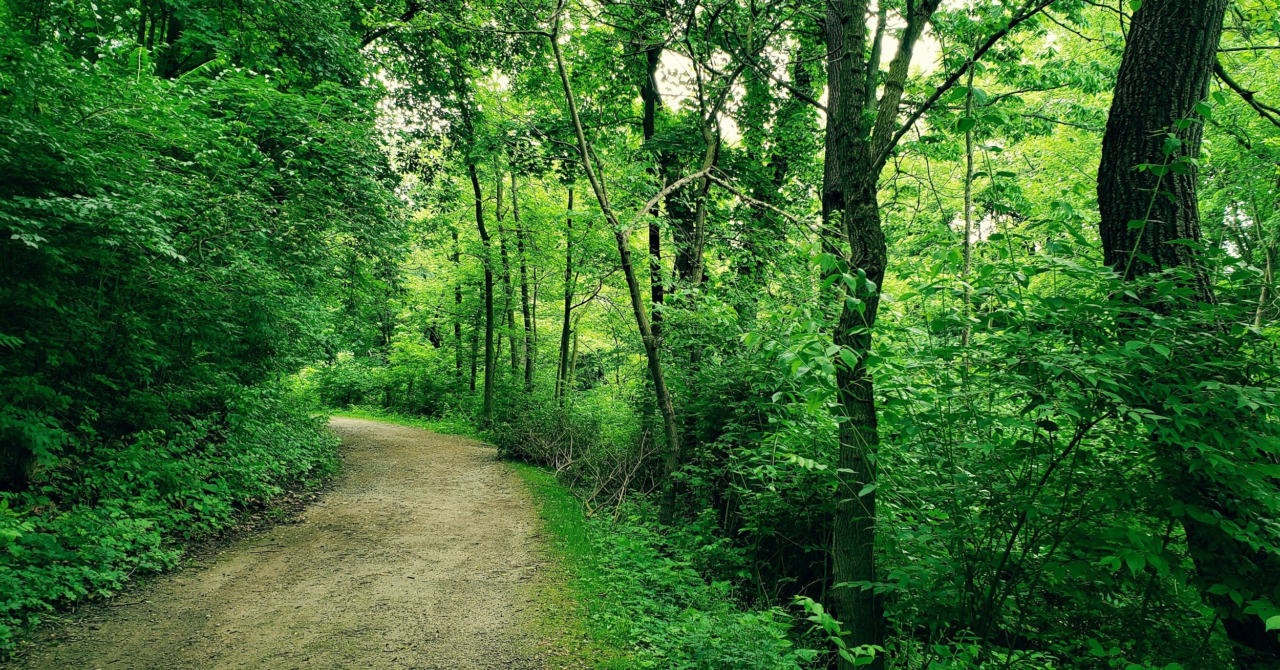 Trail at Side Cut Park in Maumee, Ohio, one of my favorite parks to go to when visiting my family.