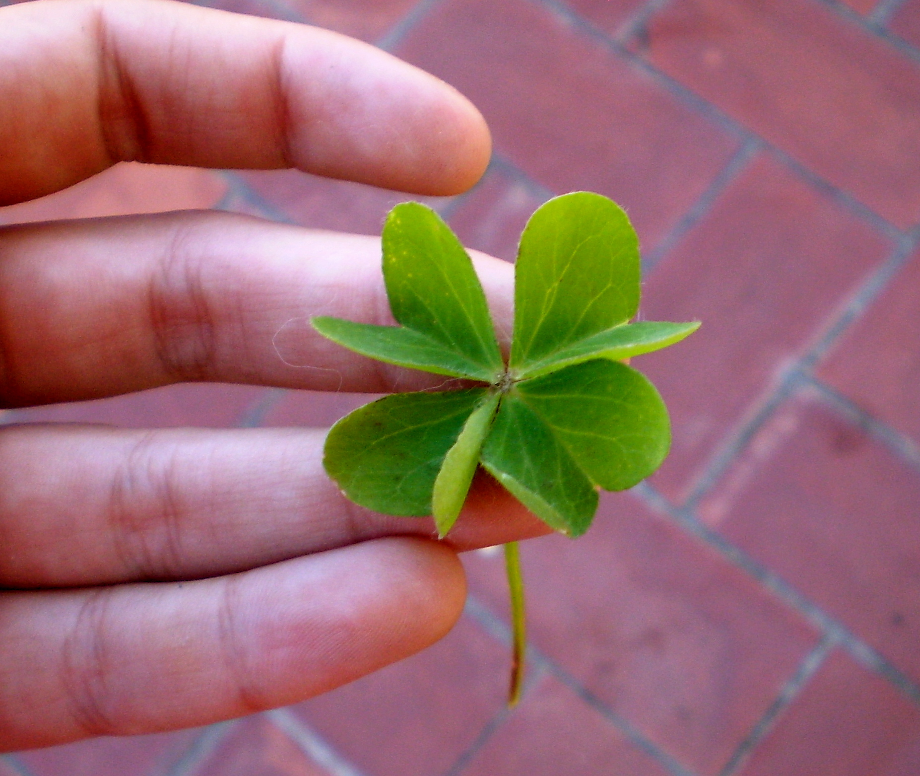 Sometimes luck is simply in appreciating the beauty of a 4 leaf clover.
