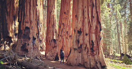 The magic of the Sequoias at Sequoia National Park.