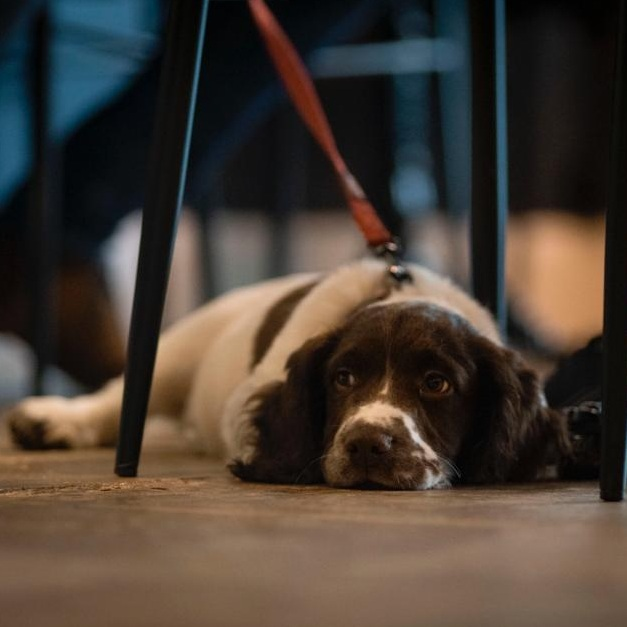 The-Press-Room-coffee-shop-south-west-London-dog.JPG