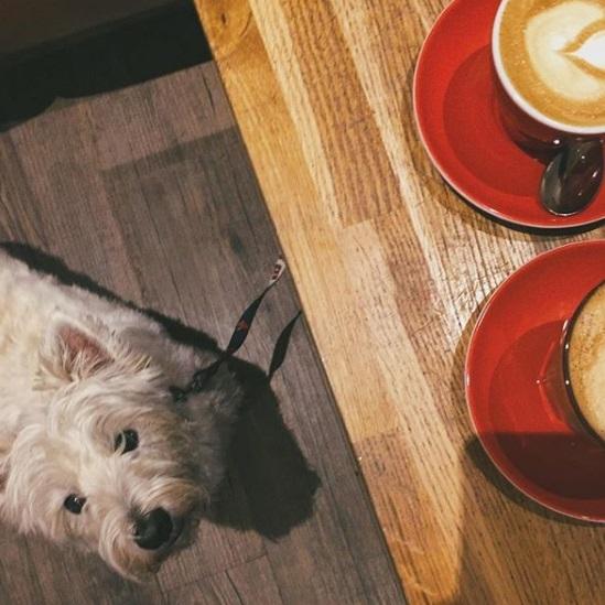 Press-Room-Coffee-Shop-dog-friendly-eyes.jpg