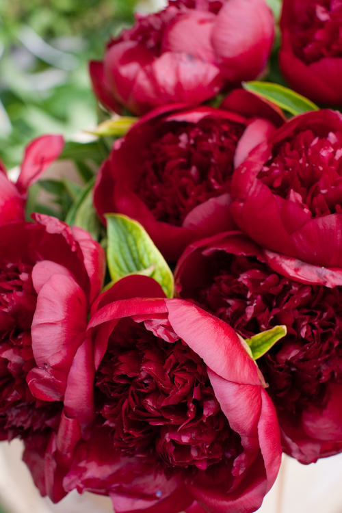 Brides Red Peony wedding bouquet.jpg