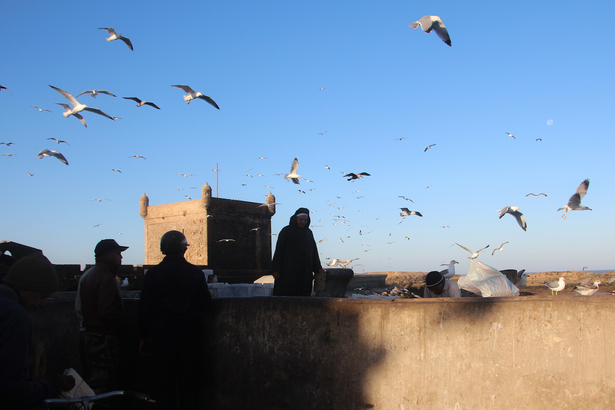 Seagulls hover for a morning bite to eat in Essaouira, Morocco